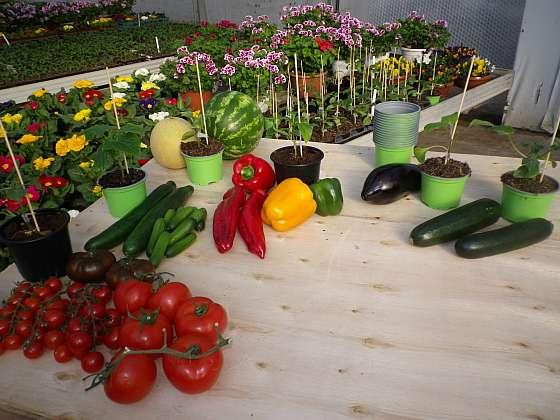 Plodová zelenina k roubování (Zdroj: Ludmila Dušková)