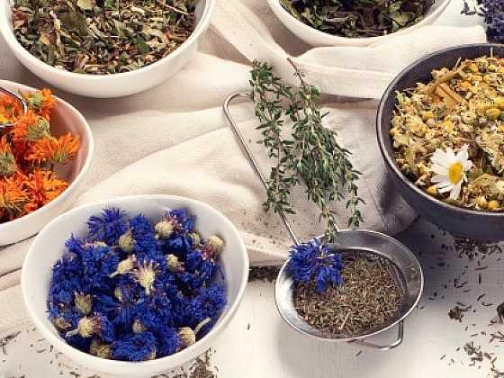 První zdravé bylinky z jarní přírody