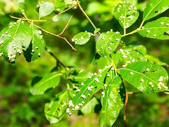Ochrana rostlin v biozahradě spočívá především v nasazení predátorů (Zdroj: Depositphotos)