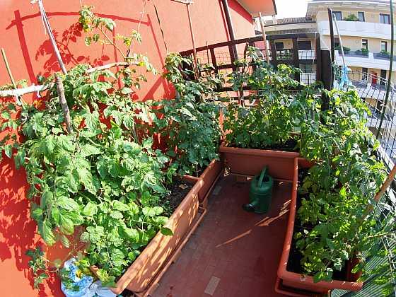 Balkon nemusí být jen pro odpočinek, ale poslouží i k zisku chutné zeleniny (Zdroj: Depositphotos)