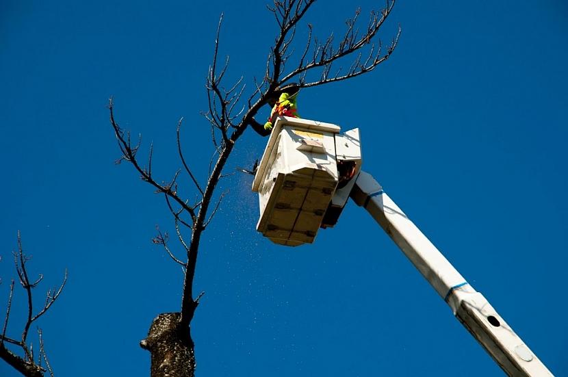 Pomocí vysokozdvižné techniky pracovníci ořežou větve a spustí je na zem