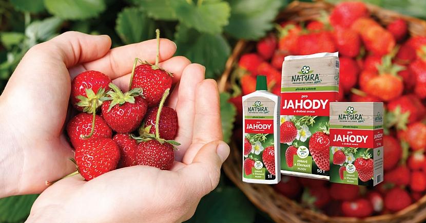 hnojivo NATURA pro jahody