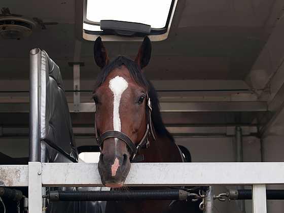Přepravníky pro koně (Zdroj: Depositphotos)