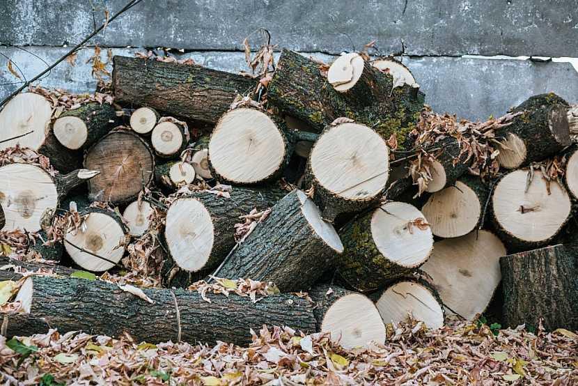 Začněte výběrem kvalitního dřeva