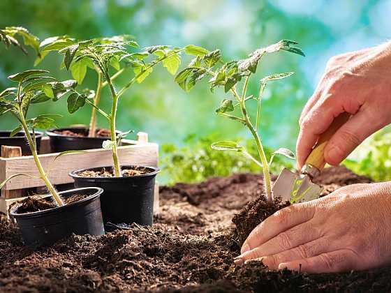 Nastal ten pravý čas pro výsadbu teplomilné zeleniny (Zdroj: Depositphotos)
