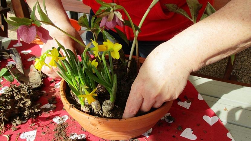 Jak si udělat minizahrádku aneb dopřejte si jarní květinový doping 3