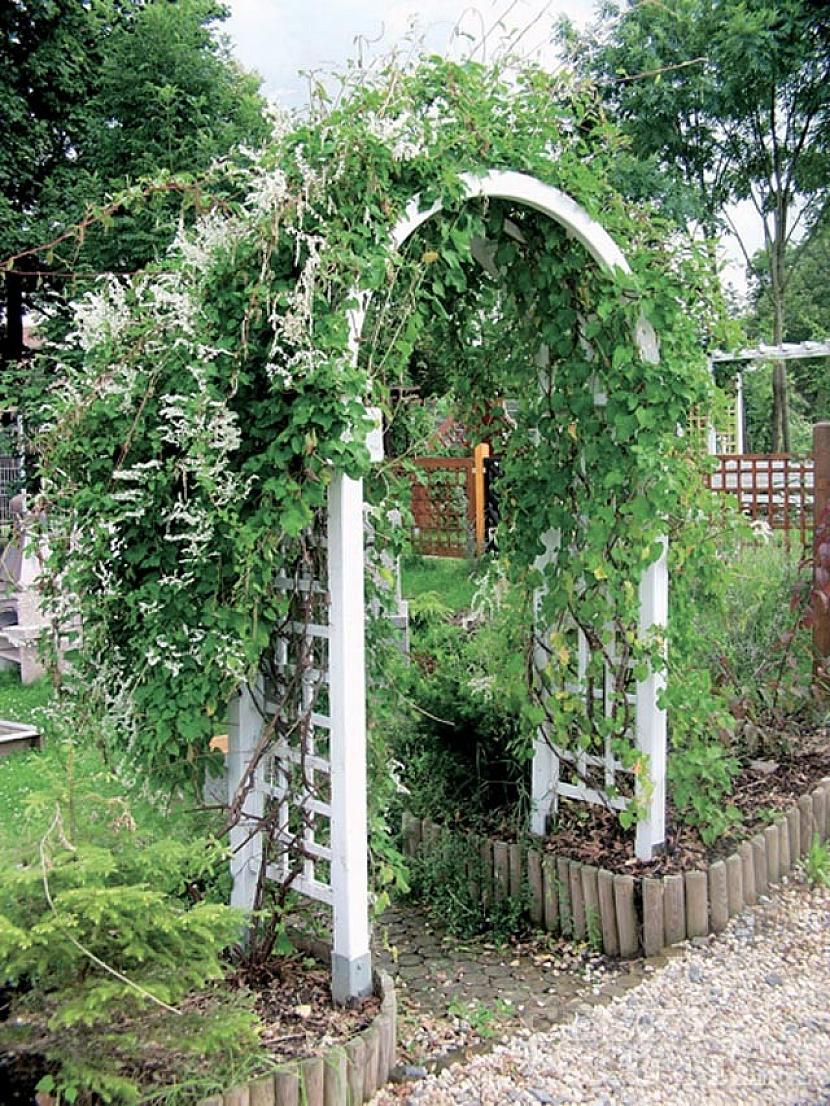 Definice zahradní pergoly