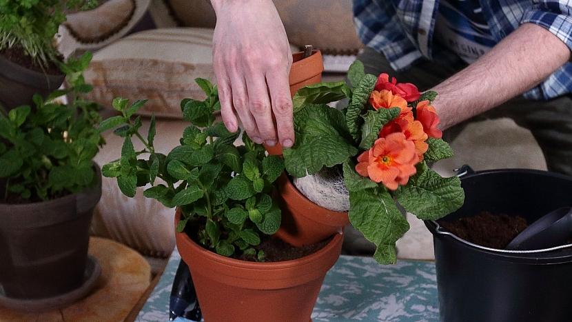 Neposlušné květináče osázíme vybranými rostlinami