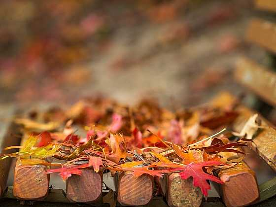 Dny se zkracují, ale v péči o domácnost, dům a zahradu je stále co dělat. Práce na podzim je ještě spousta. Podívejte se, co vše ještě musíte udělat (Zdroj: slevovekody.com)