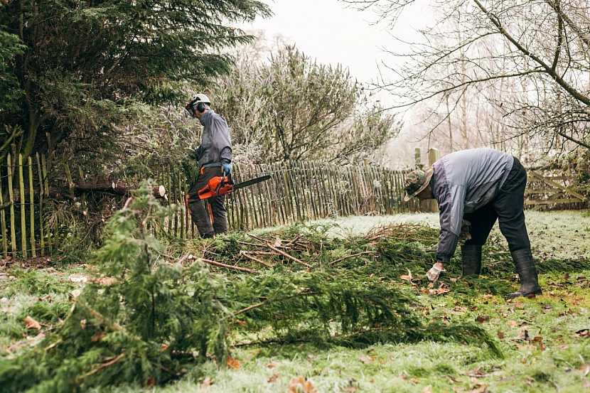 Ovocné dřeviny v zahradě je možné kácet bez omezení