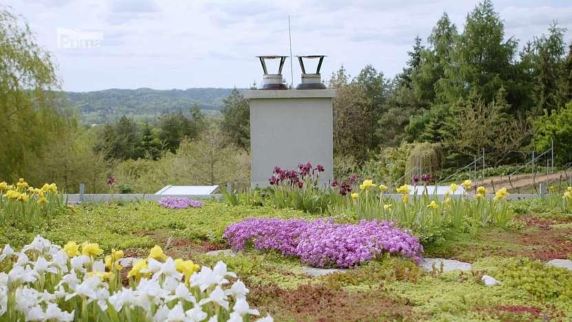 Vhodný výběr rostlin pro osazení na střešní zahradu umožní přirozenou akumulaci vody