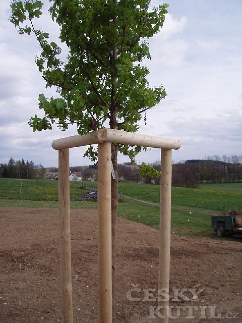 Výsadba stromků a keřů