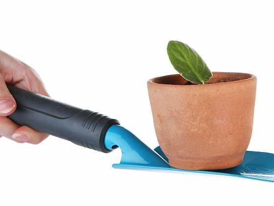 Jak správně a čím hnojit, aby vaše rostliny dobře prospívaly? (Zdroj: Depositphotos)