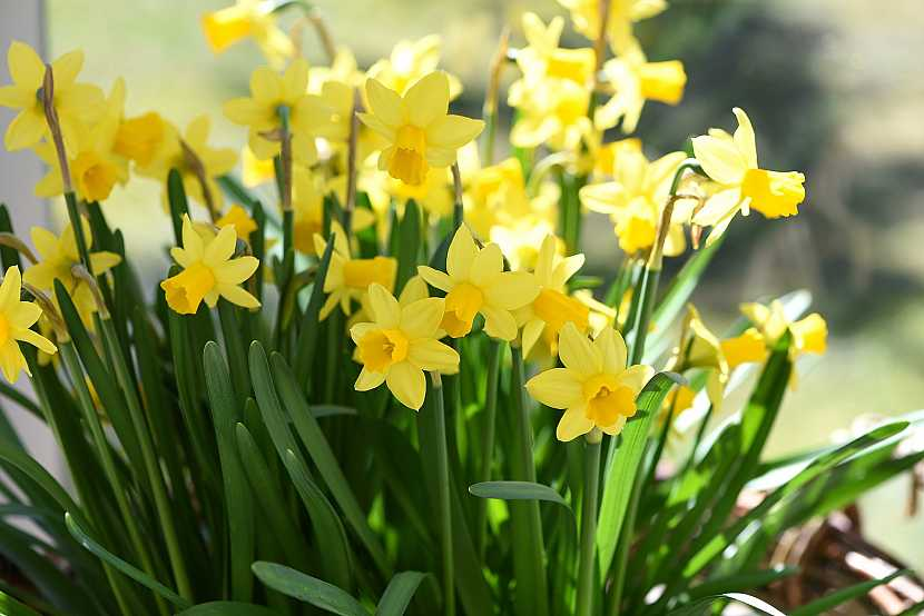 Kalendář pro zahradníky: Březen 2