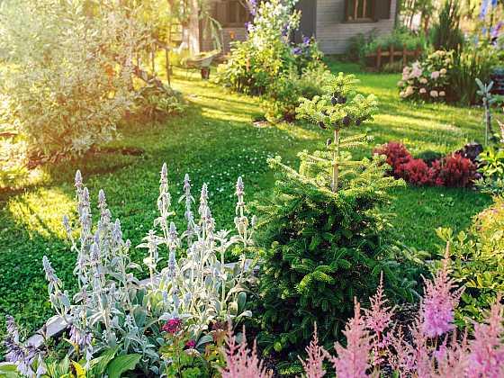 Trvalky pro bezúdržbovou zahradu (Zdroj: Depositphotos)