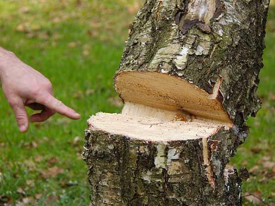 Kácejte stromy v souladu s legislativními požadavky