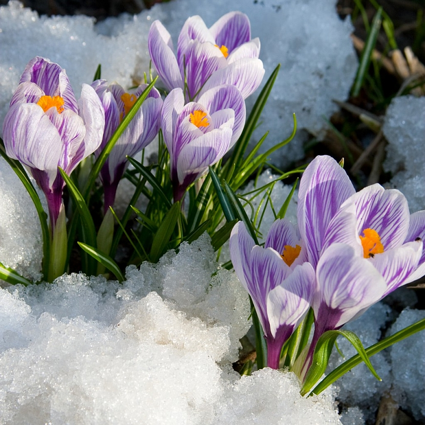 Detail působivých bílofialových květů