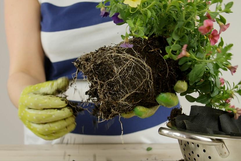 Jak pěstovat květiny v zavěšeném cedníku 4