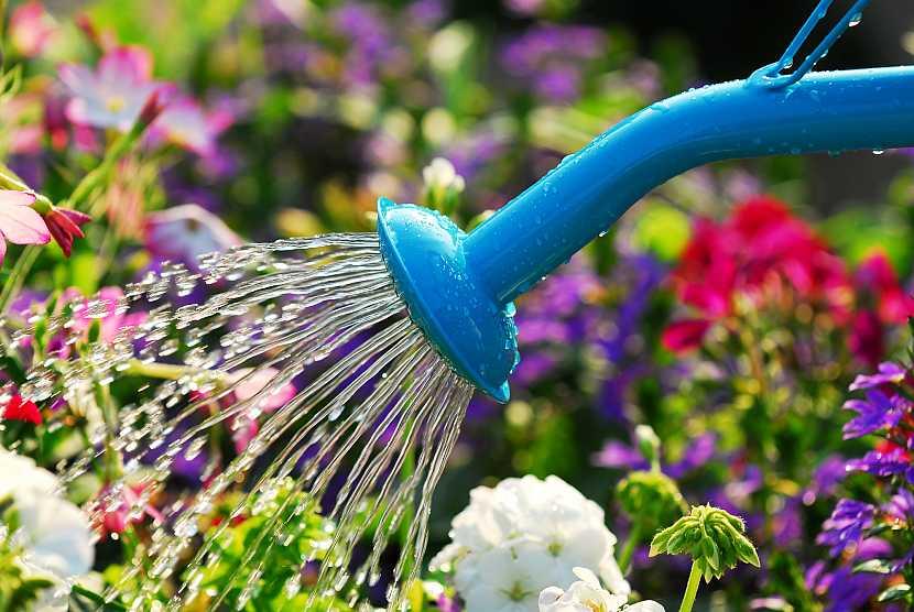 Zalévání květin