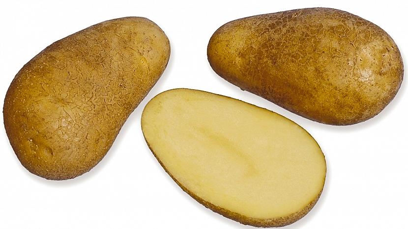 Brambory: raná salátová odrůda KARIN