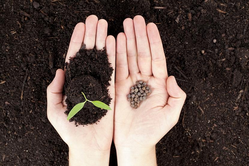Ruce se semínky a sazeničkou