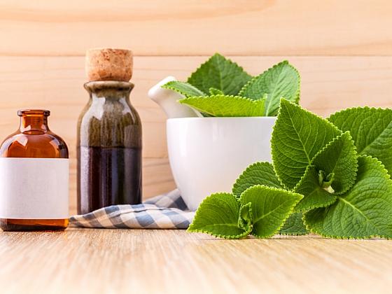 Rýmovník se používá v tradiční medicíně (Zdroj: Depositphotos)