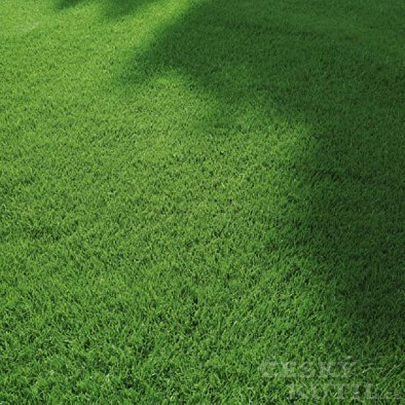Vertikutaci trávníku s WOLF-Garten ještě stihnete