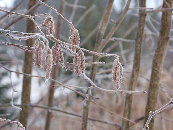 Zimní krása zahrady