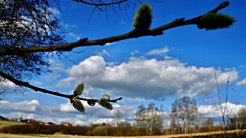 Počasí v březnu: přestože se zima ještě nevdává, kočičky už zvěstují jaro