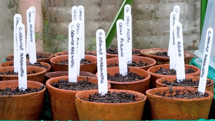 Vypěstujte si letos papriky doma: semínka sejte do hloubky 0,5 až 1 cm