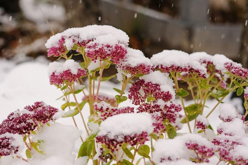 Rostliny v zimě