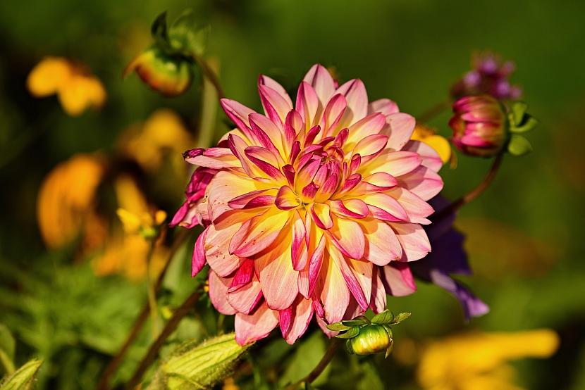 Říjen v zahradě: jiřinky nechte přezimovat v bedničkách s rašelinou