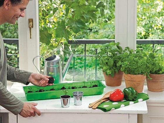Předpěstování a přímý výsev rostlin