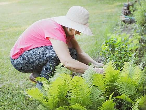 Na zahradě není pro plevel  místo, vyrazte do boje (Zdroj: HECHT)