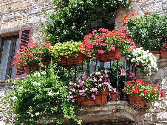 Květiny v nádobách jsou rozšířeným trendem. Svými kouzelnými barvami dokreslují celkový ráz jednotlivých zákoutí (Zdroj: Depositphotos (https://cz.depositphotos.com))