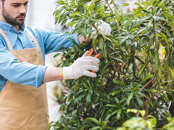 Na jaře je potřeba okrasné dřeviny prořezat stejně tak jako třeba ovocné stromy (Zdroj: Depositphotos)