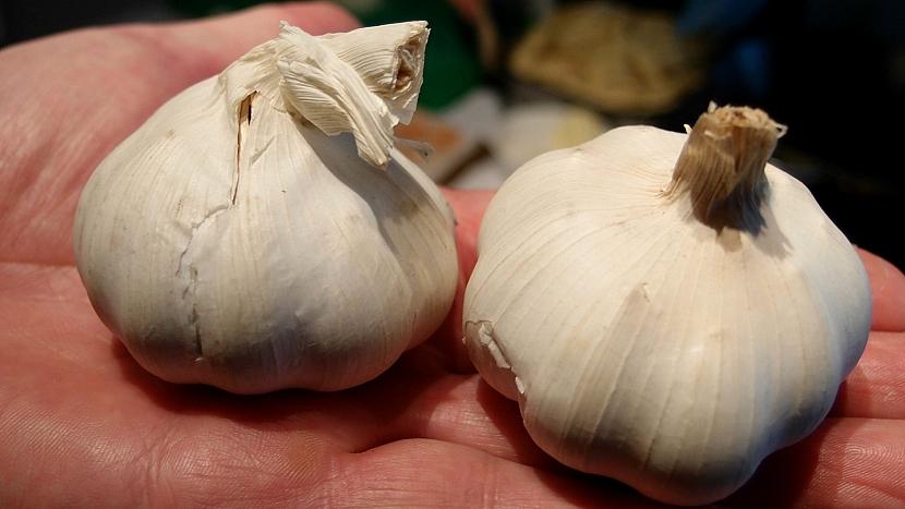Vlevo česnek španělský, vpravo český