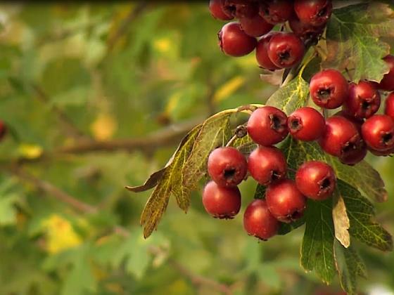 I když nevoní, mohou se stát okrasnou i užitečnou ozdobou zahrady (Zdroj: Archiv FTV Prima, se svolením FTV Prima )