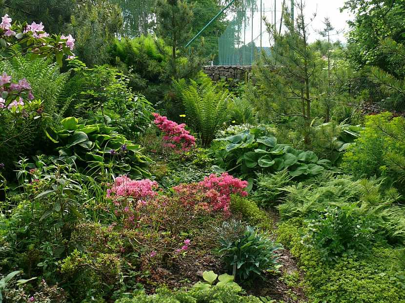 Kapradiny, rododendrony a hosty v zahradě