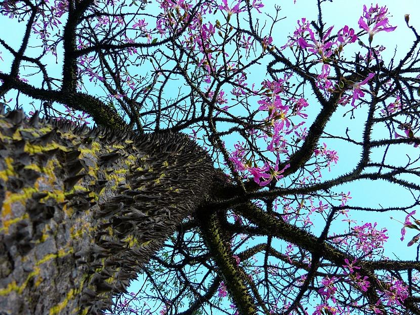 Stromy s nejkrásnějšími květy: Exotická krása rozkvetlých stromů 3