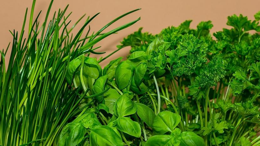 Předpověď počasí a zahrada: vrcholí sklizeň aromatických bylin - petrželky, pažitky, bazalky a dalších