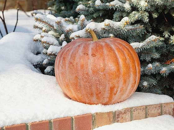 I v zimě můžete sklízet mrazuvzdorné druhy zeleniny (Zdroj: Depositphotos (https://cz.depositphotos.com))