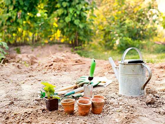 Podzimní výsadba ovoce a zeleniny je tady (Zdroj: Depositphotos)