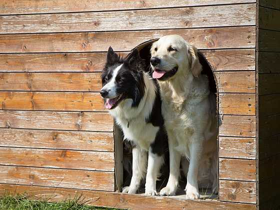 Bouda pro psa musí být na míru pro vašeho hlídače (Zdroj: Depositphotos)