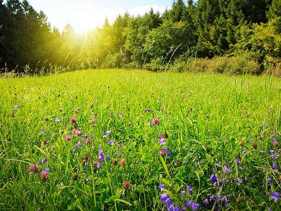 Kvetoucí louka je největší zdroj medonosných rostlin, proto ji sekejte tak, aby kvetení bylo podpořeno (Zdroj: Depositphotos (https://cz.depositphotos.com))