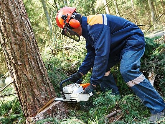 I když se chystáte na kácení stromů na vlastní zahradě, není to jen tak. I zde platí jistá pravidla, která byste měli znát. (Zdroj: Depositphotos)