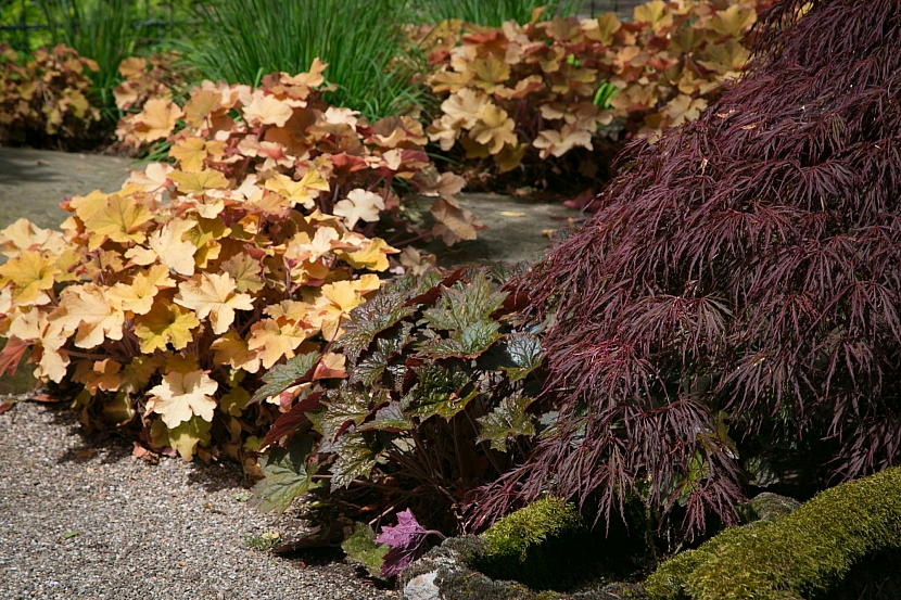 Červenolisté varianty rostlin