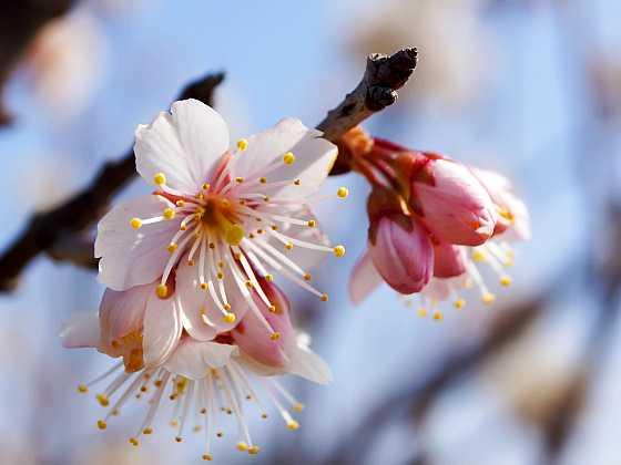 Ovocné stromy hlásí, že je čas je přihnojit (Zdroj: Depositphotos)