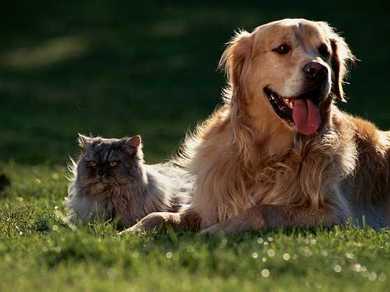 10 častých omylů o parazitech u psů a koček (Zdroj: Ogilvy)