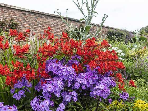 Půvabně kvetoucí hlízy (Zdroj: Depositphotos)